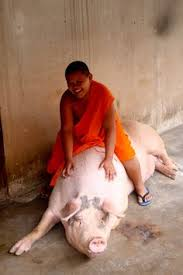 monastic_pig